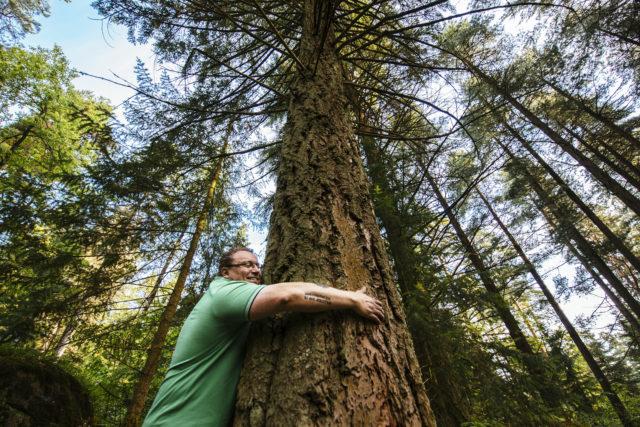 Havupuut ovat iso osa Arboretum Mustilan puulajistoa.