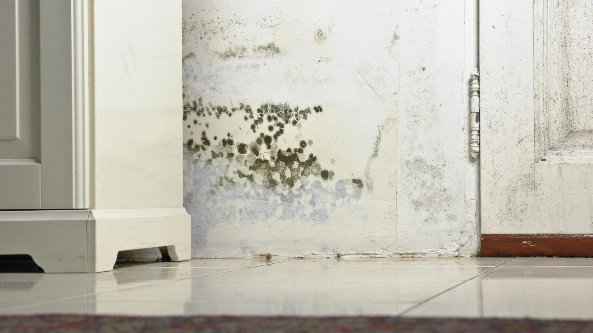 Kosteusvauriot saavat homekasvuston muhimaan pinnoilla.