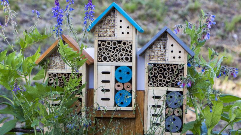Hyönteishotellit ovat pistiäisille rakennettuja pesäpaikkoja.
