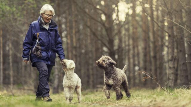 Koiranomistajat ovat usein muita aktiivisempia, sillä lemmikki pakottaa liikkumaan.