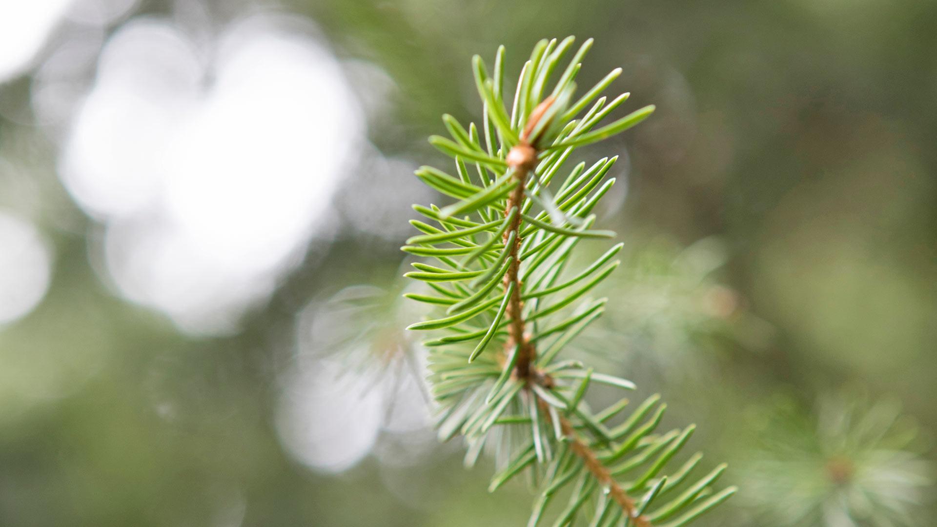 Metsien täyttämä Suomi on yllättäen hiilinielujen suurvalta.