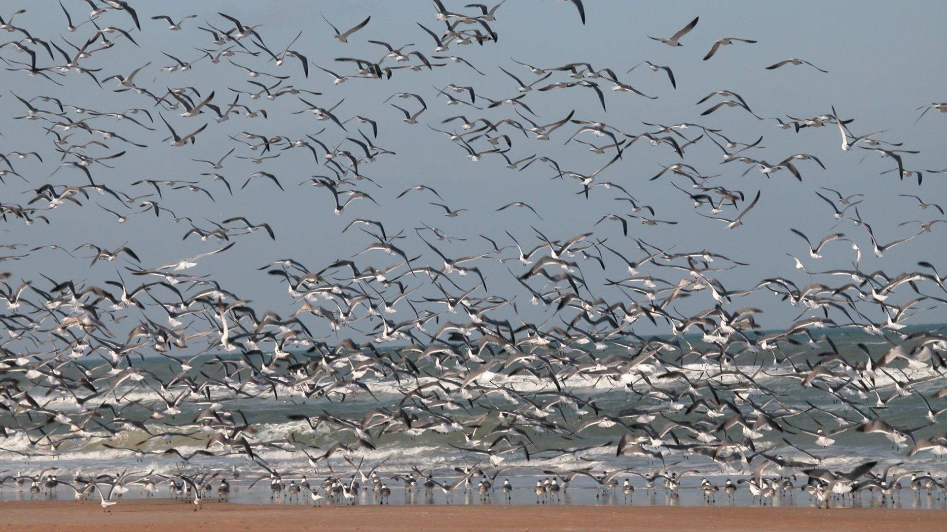 Kalajäte on ollut vuosikymmeniä helppoa pikaruokaa merilinnuille.