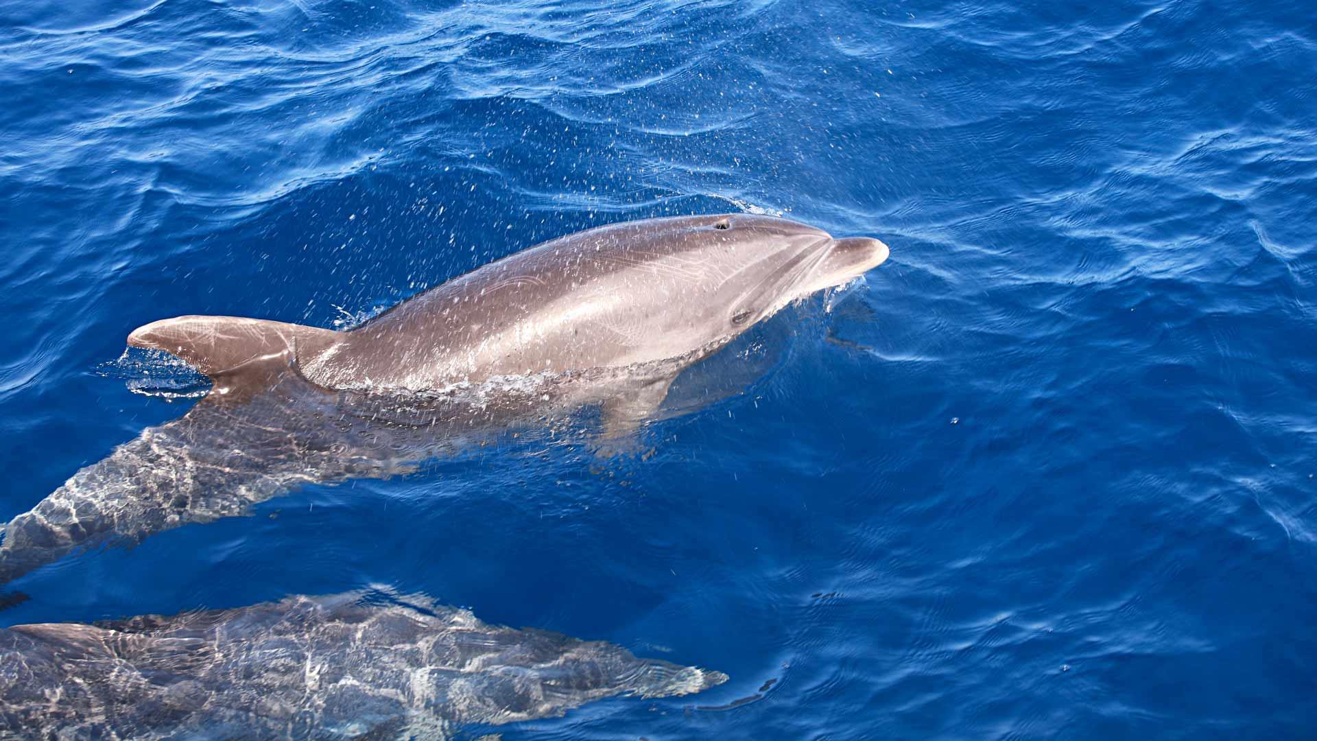 Delfiinejä näkee safarilla, enemmän tai vähemmän.