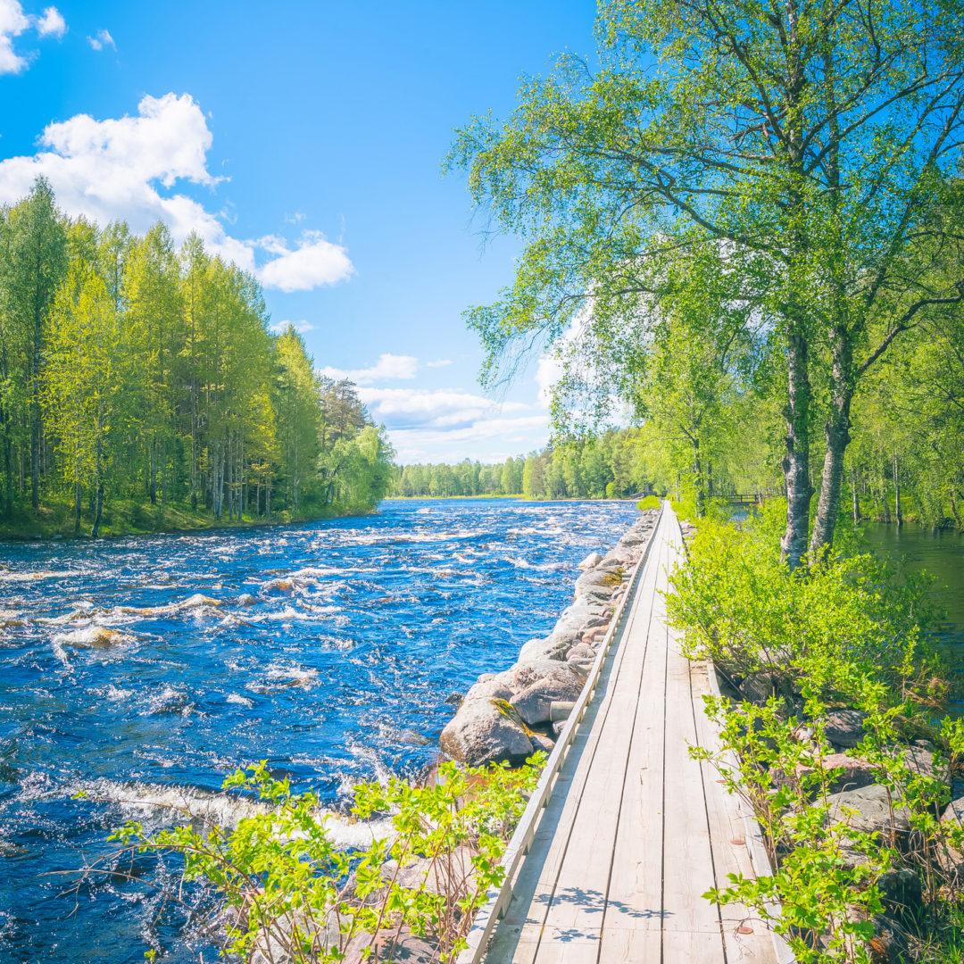 Luonnonsuojelualue Kuhmon ja Kostamuksen maisemissa.