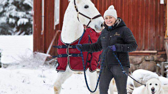 CarolinaCasagranden päivät täyttyvät tallitöistä ja hevosten kanssa työskentelystä. Kultainennoutaja Salino seuraa mukana, kun Carolina vie lipizza Sandorin ja muut hevoset ulos.