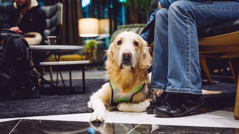Koirien uusivuosi: Hotelli. Clarion Hotel Helsinki Airport järjestää neljättä kertaa koirien uudenvuoden. Tapahtuma sai inspiraation Ruotsin Arlandan Clarionin lentokenttähotellista, jossa vastaavalla tapahtumalla on pitkät perinteet.