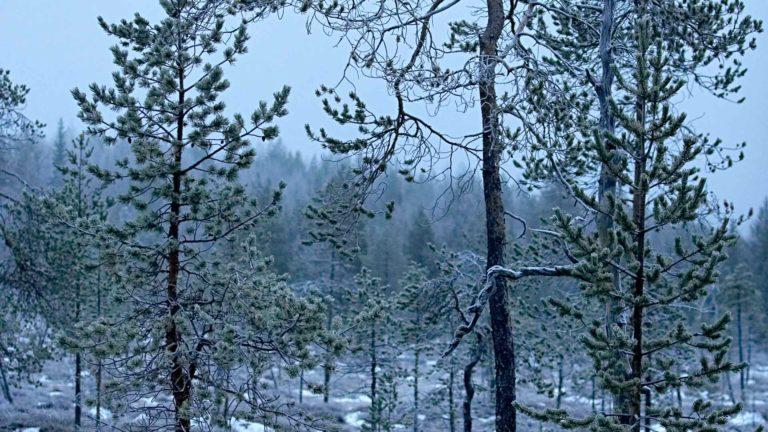 Noin 85 prosenttia suojelluista metsistä ja kitumaista on valtion omistuksessa.