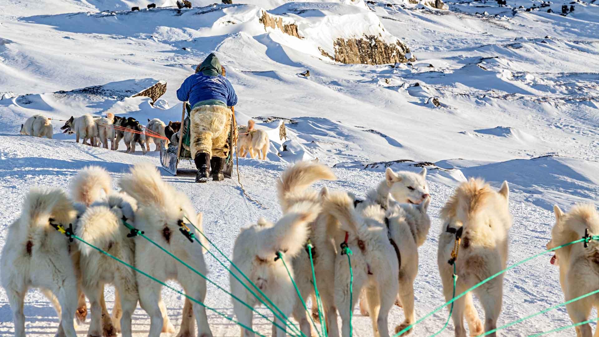 Arktisen hyisissä oloissa koira on ihmisen paras ystävä.