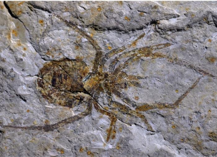 Sensaatiomainen fossiili puhuttaa.
