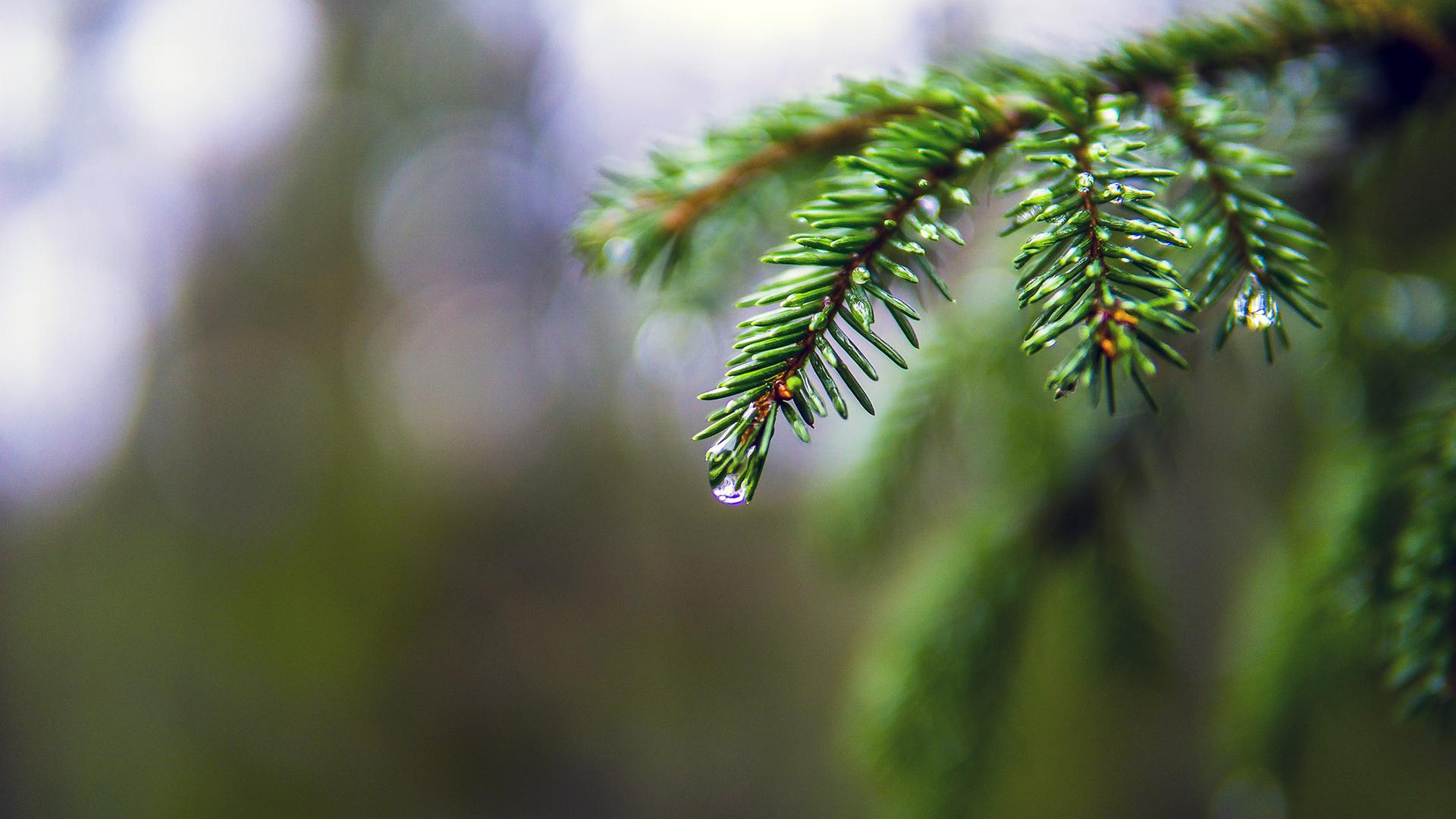 Ilmaston lämpenemisen edetessä muutokset Suomen lumitalven pituudessa ja lumensyvyydessä tulevat yleistymään ja lisääntymään.