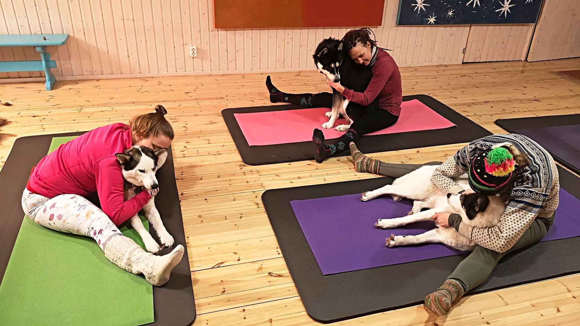Huskyjoogaa järjestävät yhteistyössä Talliaitta Wellbeing, joogaohjaaja Miia Ritola, Husky Outdoor Levi ja Loma-Paksu.