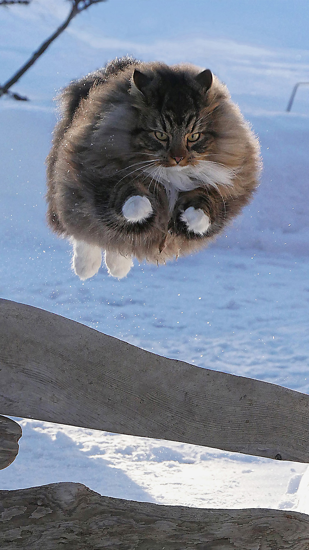Some-kissa Sämpy on vauhdikas veijari.