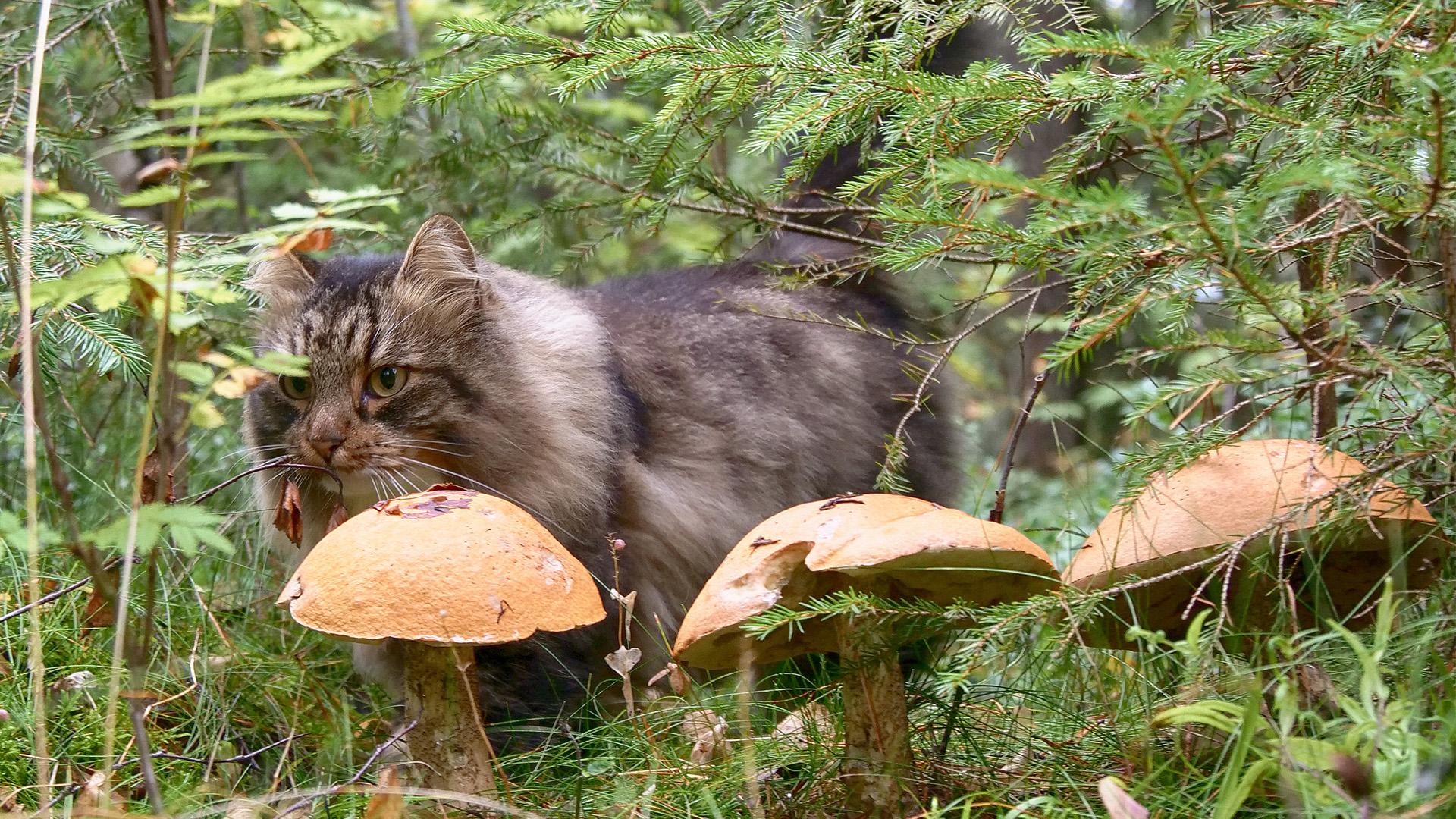Sämpy-kissa seikkailee.