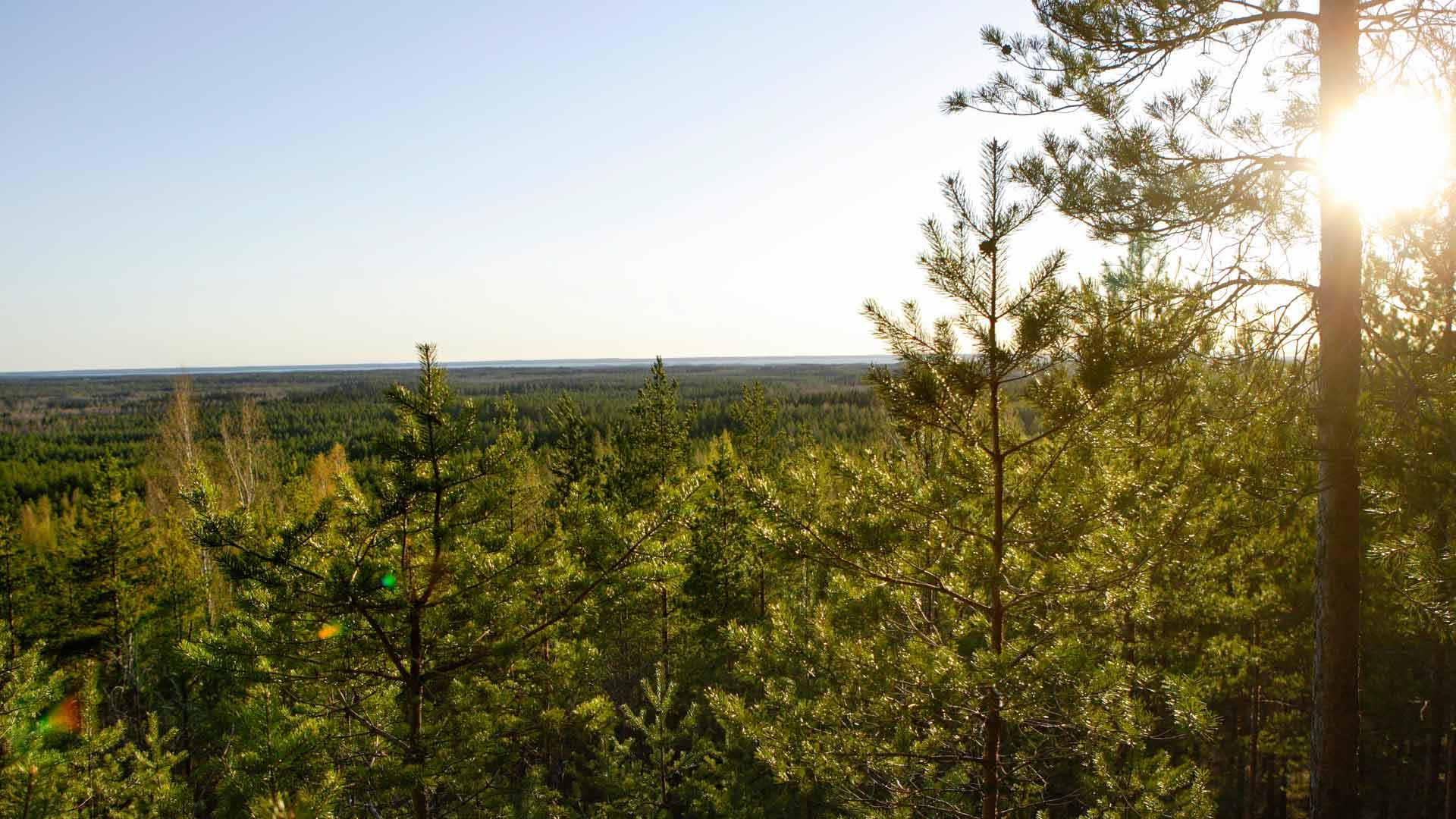 Vielä on yksi, joka ei huoju eikä horju. Suomen luonto on avoinna vuorokauden ympäri.