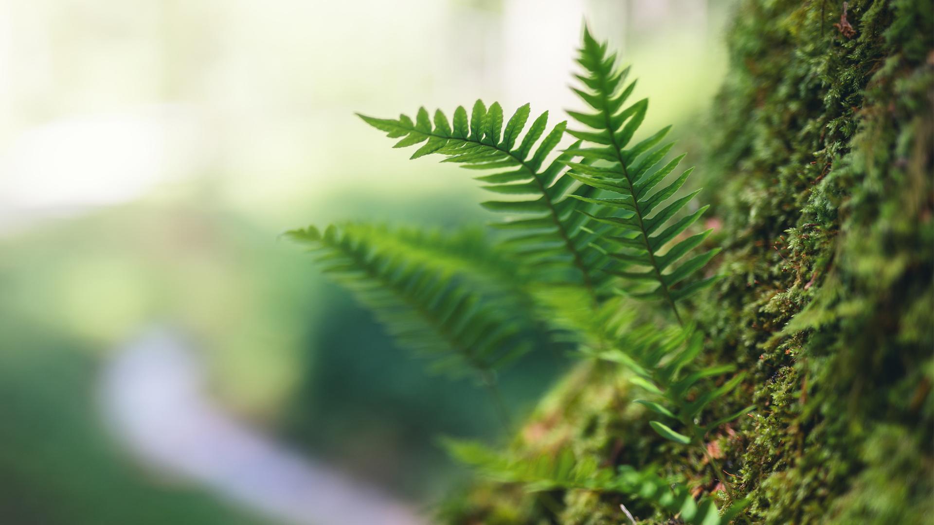 Metsä ja luonto ovat monelle hyvinvoinnin lähde.