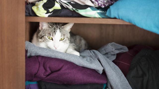 Jos kissa vetäytyy omiin oloihinsa, anna sen olla rauhassa.