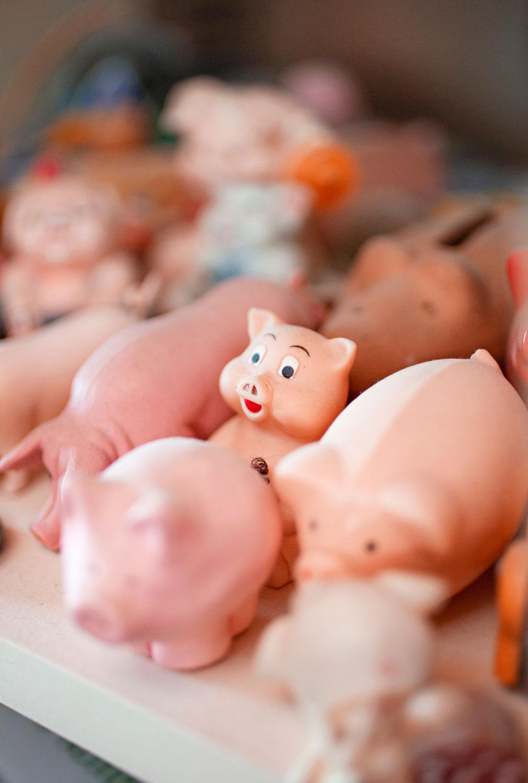 Markun sikakokoelmaan kuuluu noin 500-600 erilaista porsasta.