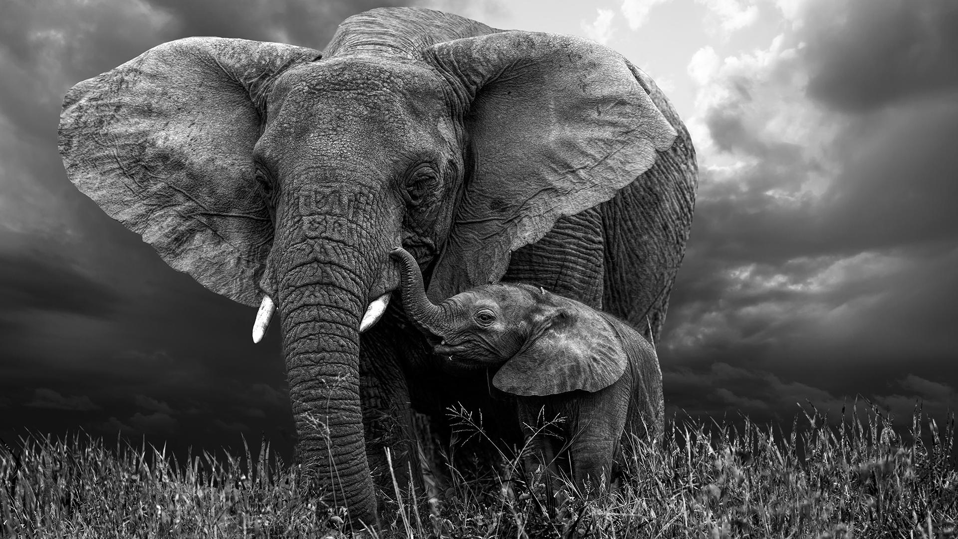 Tutkimuksen mukaan norsujen sukulaisuus ei vaikuttanut siihen miten kiinnostuneita ne olivat vainajista.