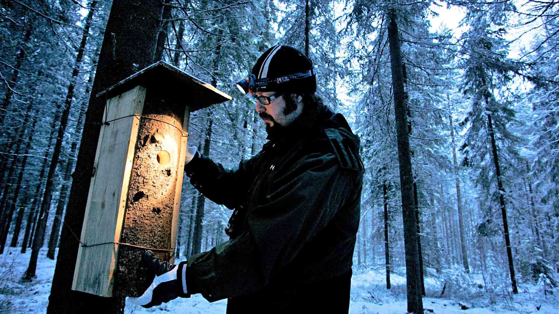 Tutkija Otso Huitu suosittelee viemään linnunpönttöjä metsään.