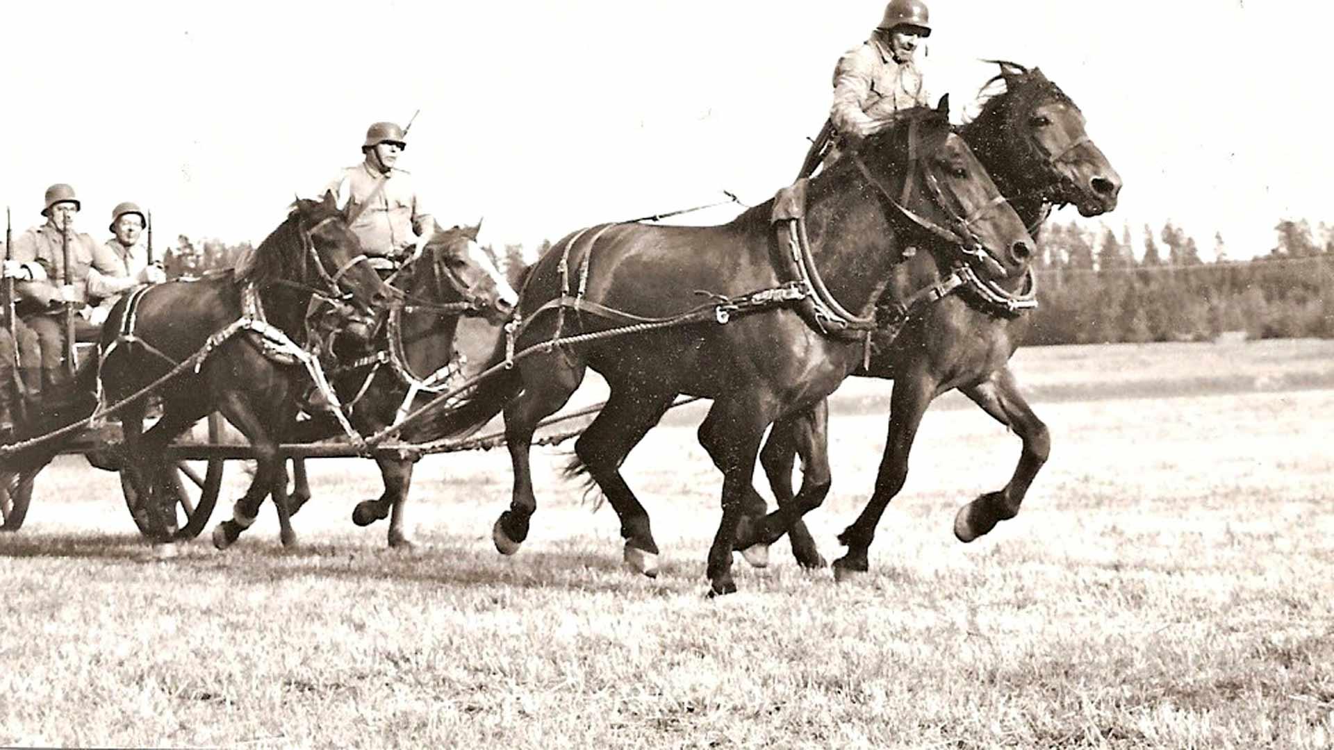 Perinnevaljakon hevoset