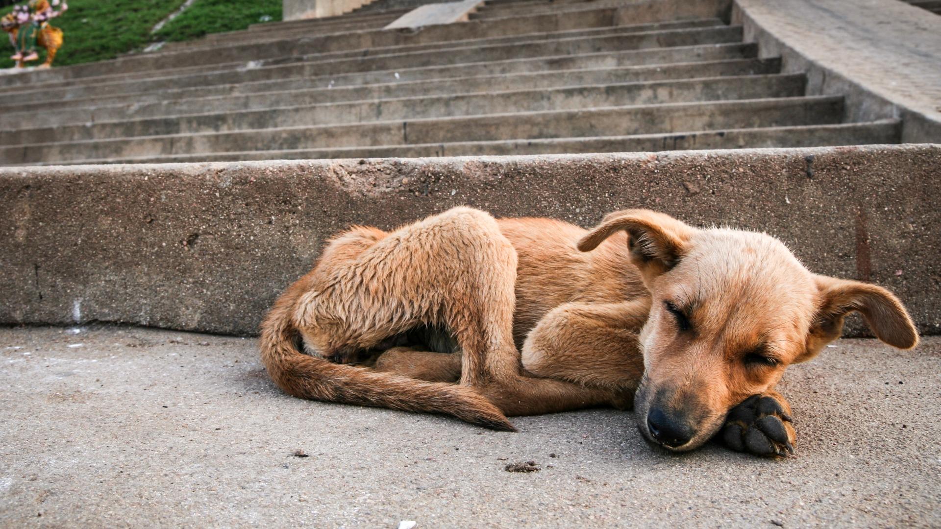 HESY:n tapahtumassa kotia etsivät myös rescue-koirat, joita yhdistykset välittävät ulkomailta.