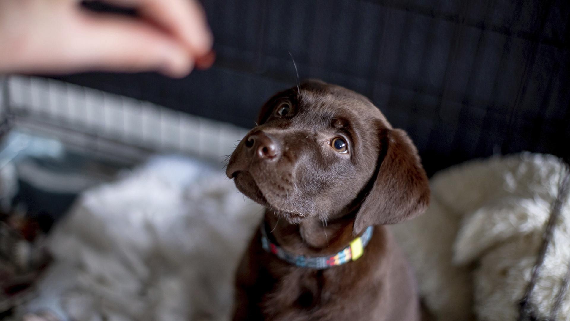 Koirat ovat oppineet, että ihmiseltä saa ruokaa– ja herkkuja.