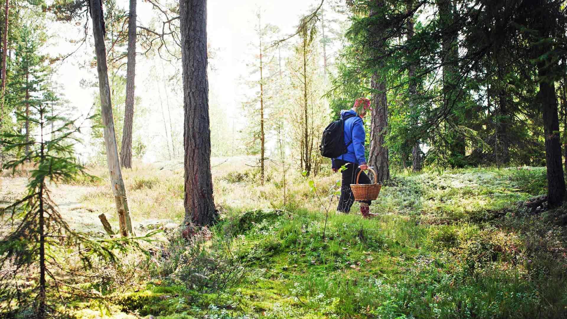 Metsään kannattaa lähteä korin kanssa, sillä sieltä löytyy paljon syötävää. Liiku kiireettä, iloitse ja nauti siitä, mitä tällä kertaa luonnosta löytyykään.