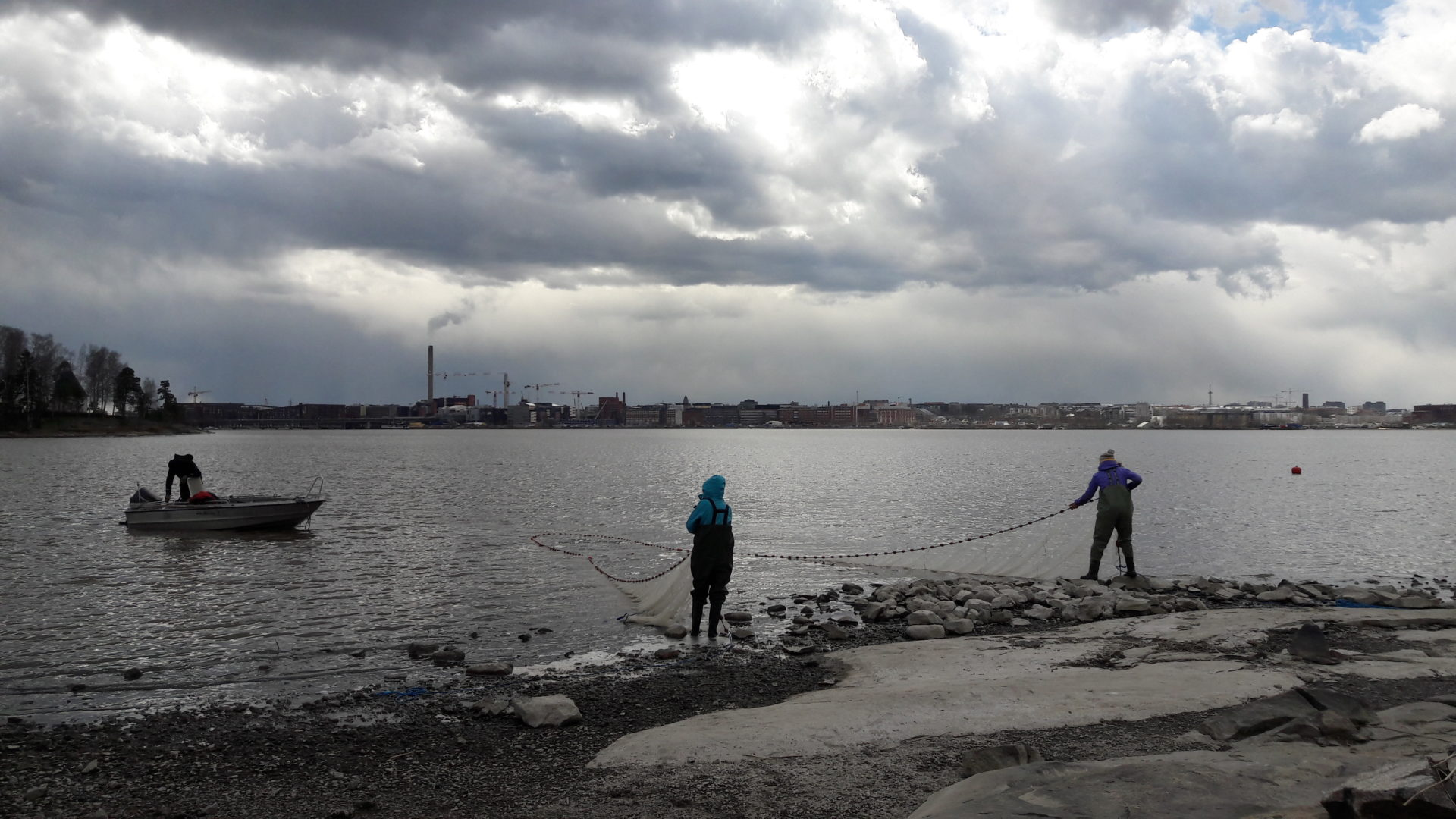 SYKEn tutkimusryhmä nuottaa rannikon kaloja mikromuovitutkimusta varten.