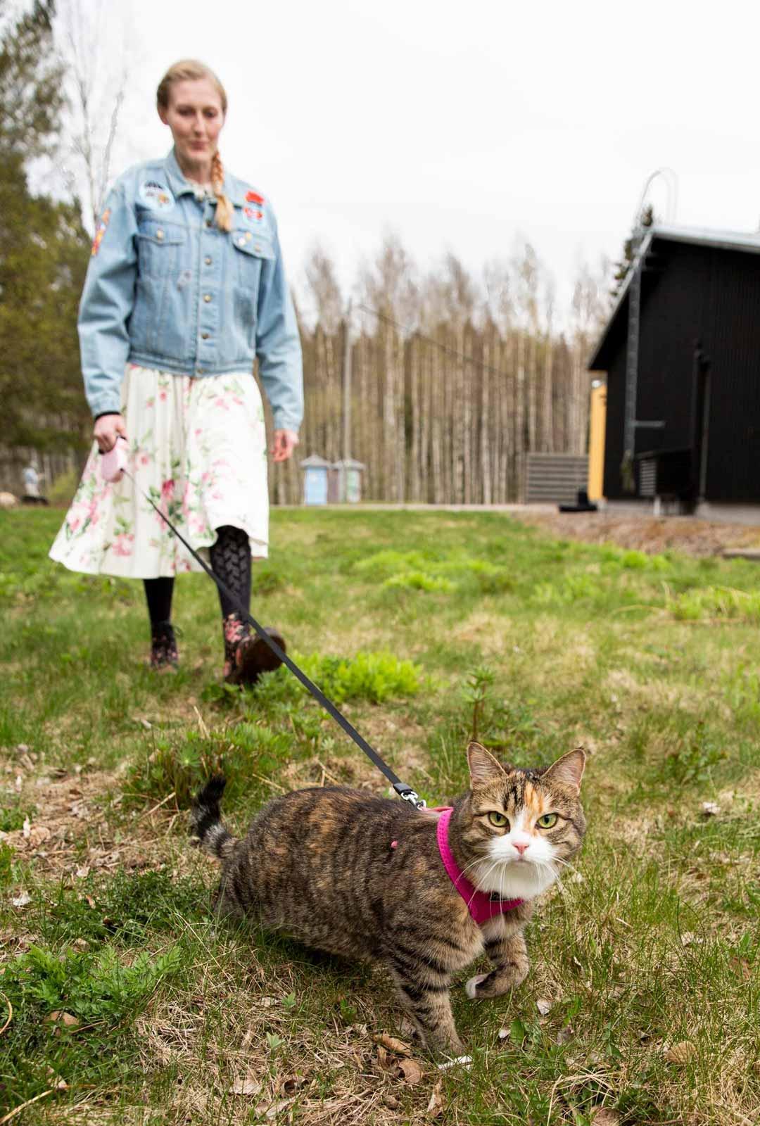 Riepu-kissa on hoidossa eläinlääkäri Oona Miukun isovanhempien luona Vantaalla.