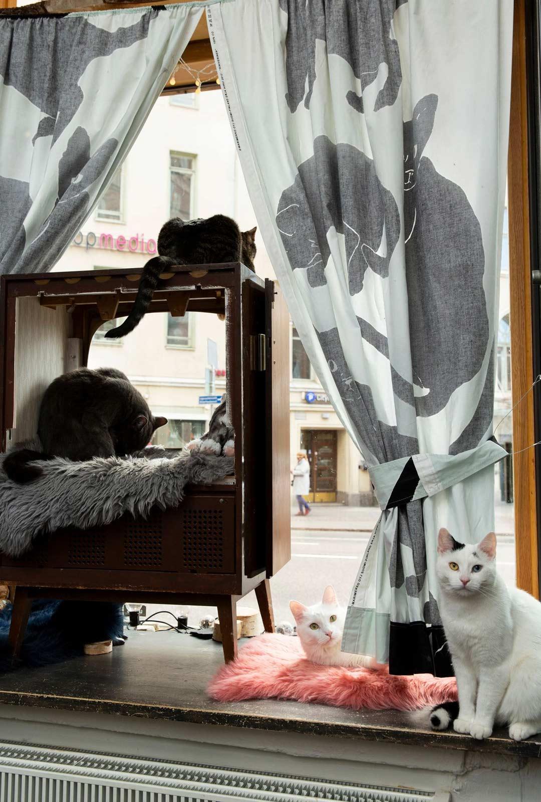 Vanhasta kuvaputkitelkkarista tehty nukkumapaikka on Kissakahvilan kissojen suosiossa.