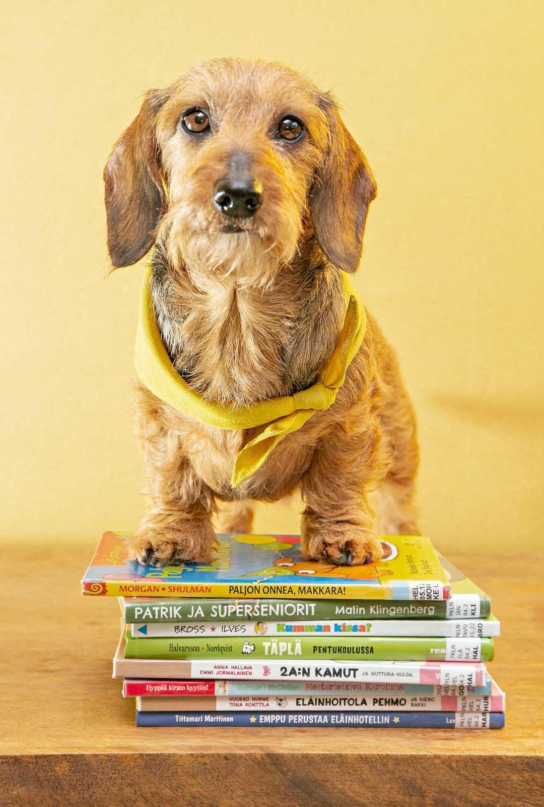 Lukukoira Sylvi on hyvin ihmisystävällinen, aktiivinen ja työorientoitunut koira.