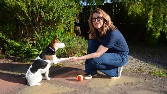 Tutkijathavaitsivat koiran muuttuvan varsin tottelemattomaksi murrosiän aikana.