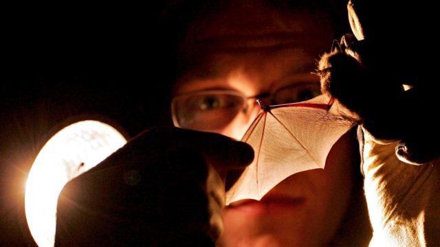 Lepakot tutkijan kohteena