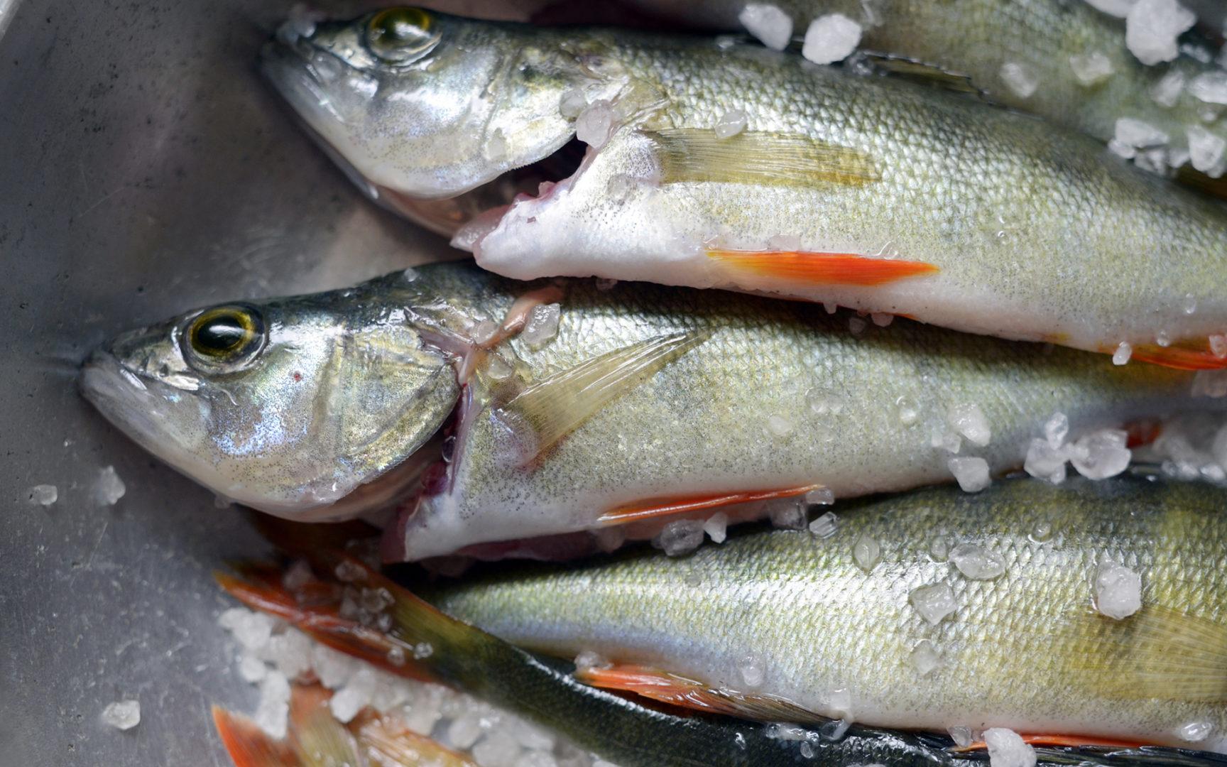 Jos kriisi iskisi, kotimaisesta kalasta Suomessa tulisi pula.