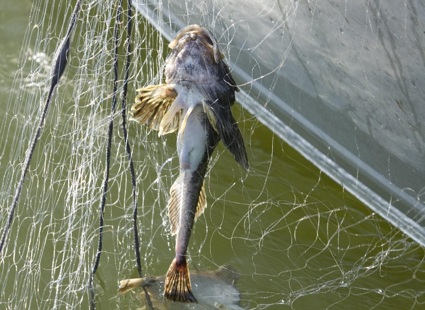 Kala verkossa