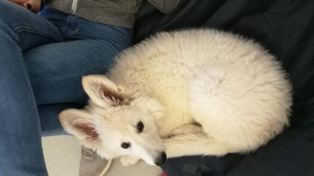 Pieni Martta-koiranpentu sulatti kaikkien sydämet.