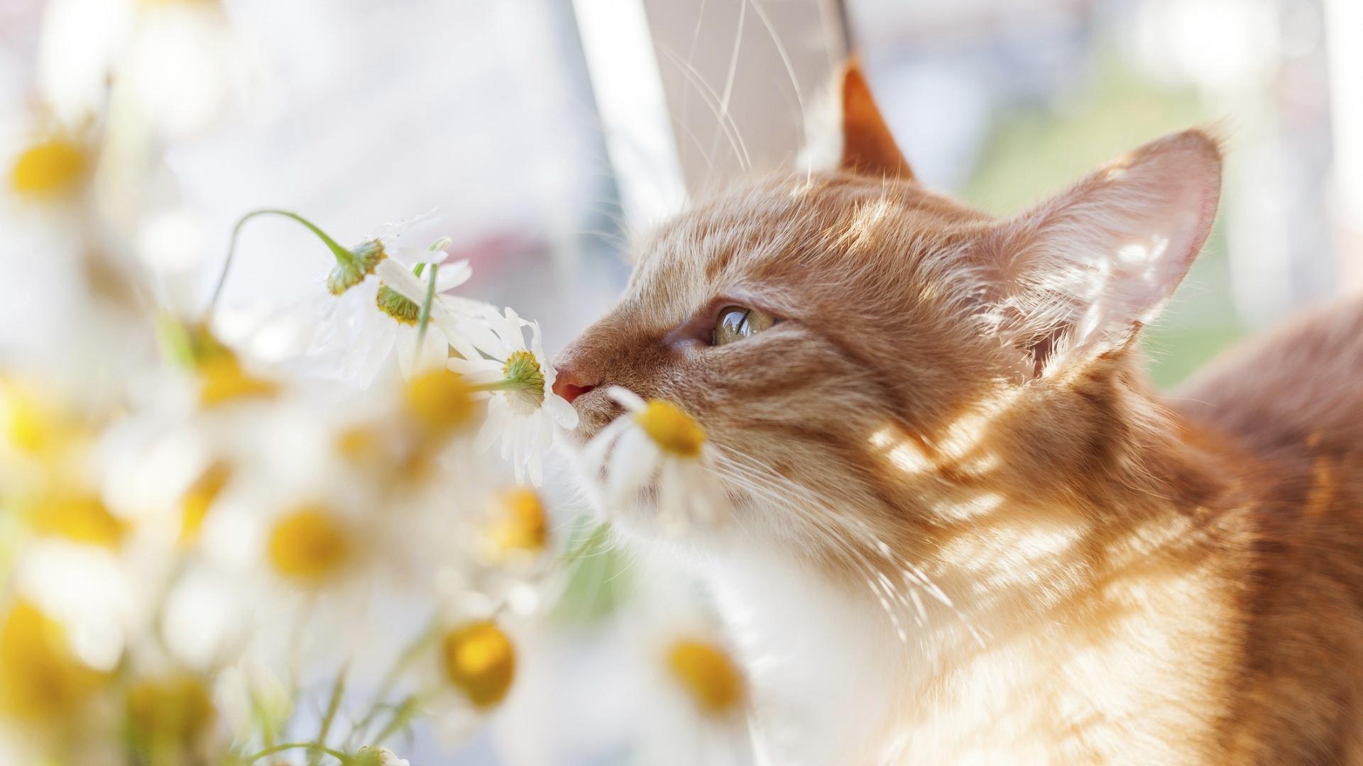 Kissan aktivointi onnistuu myös erilaisten hajujen avulla, koska kissalla on tarkka hajuaisti.