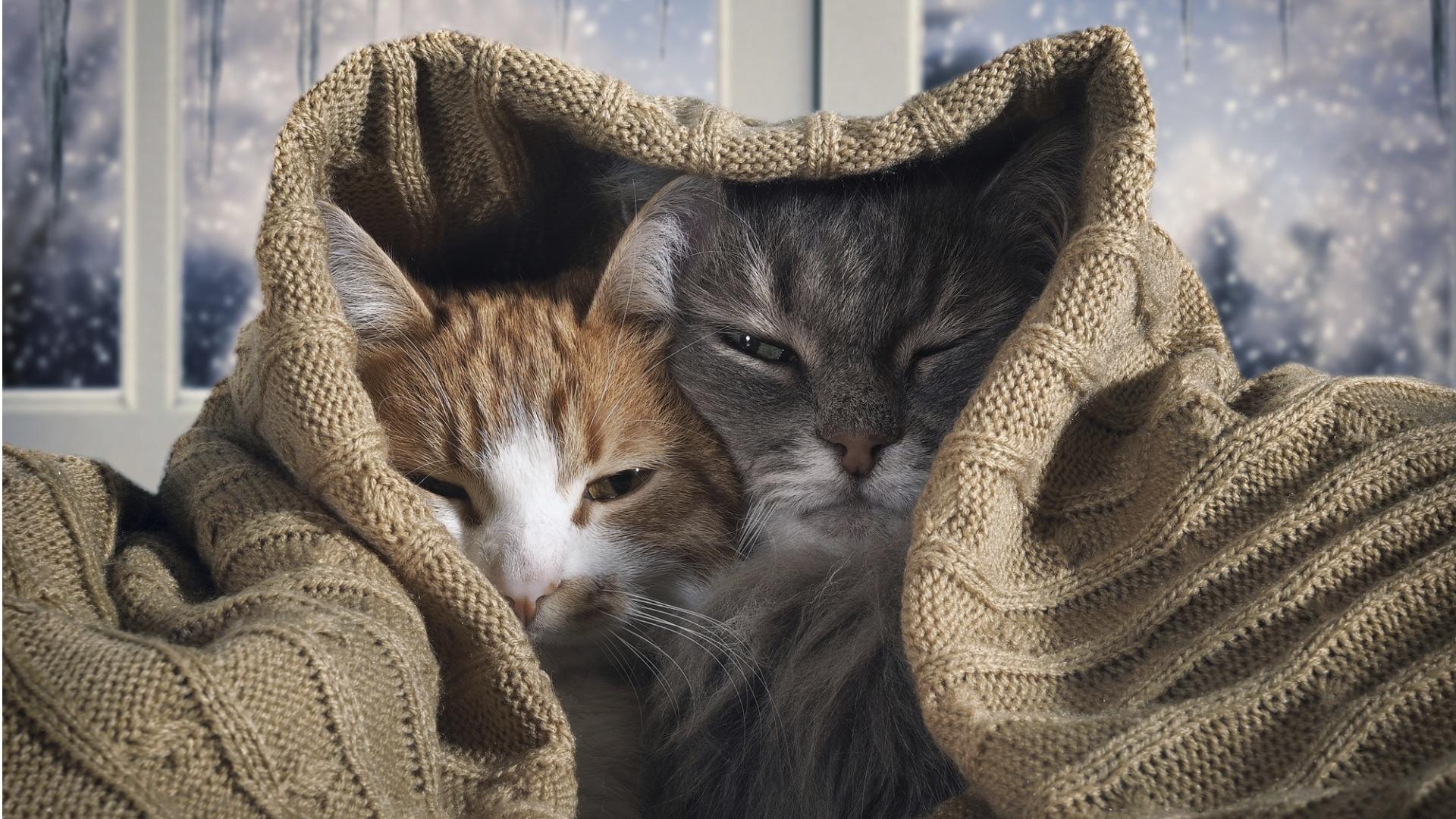Kissojen yhteiseloa helpottaa, kun ne eivät joudu kilpailemaan resursseista: hiekkalaatikoita, piiloja ja raapimapuita tulisi olla useita.