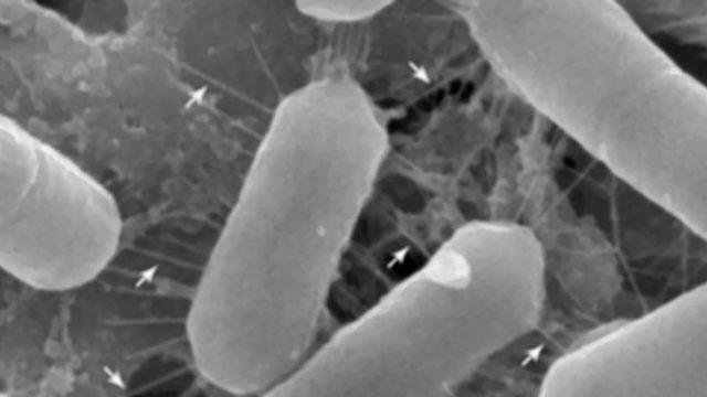 Tutkijat kehittivät löydön pohjalta probioottisen nenäsuihkeen.