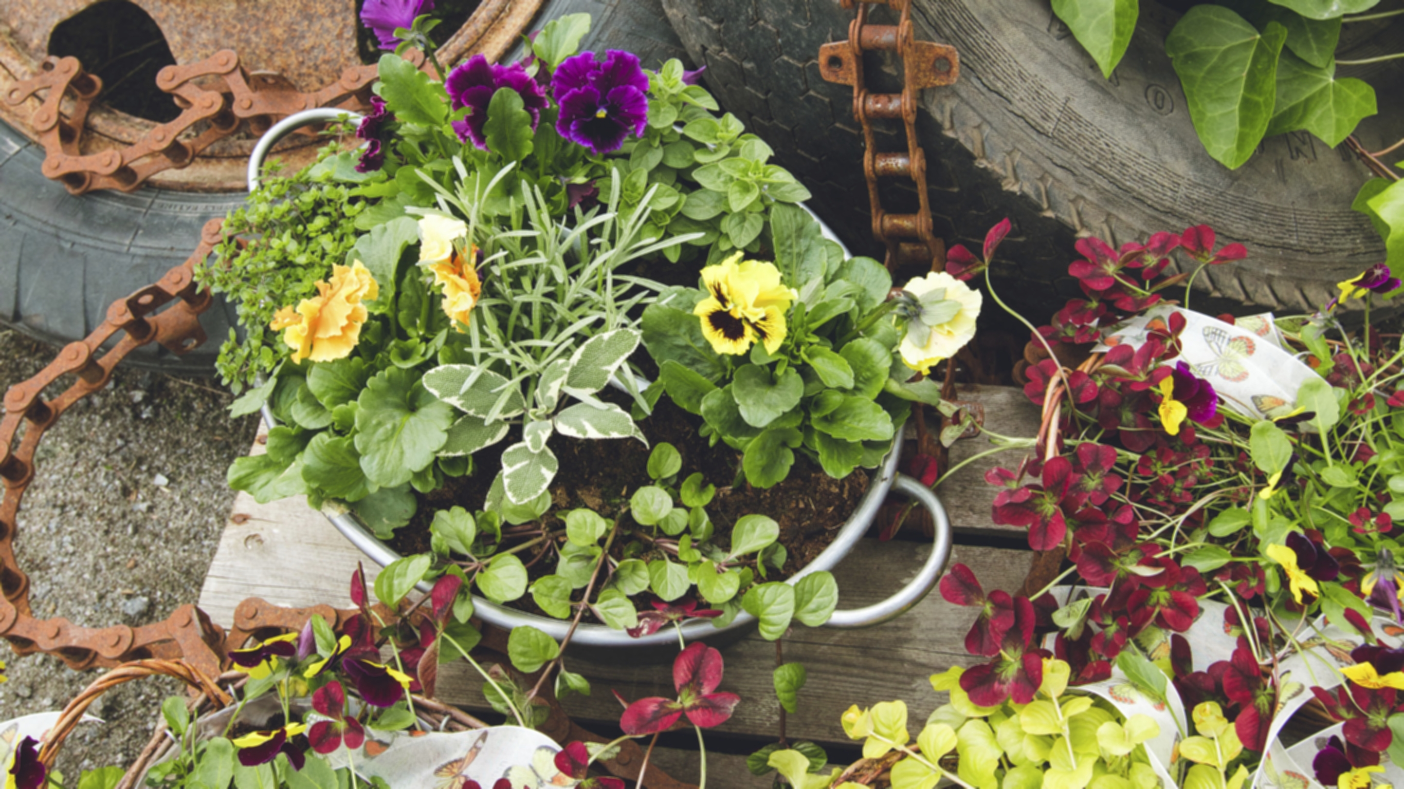 Koronakevään suosituimpia kasveja ovat olleet kaikki värikkäät ja syötävät kasvit.
