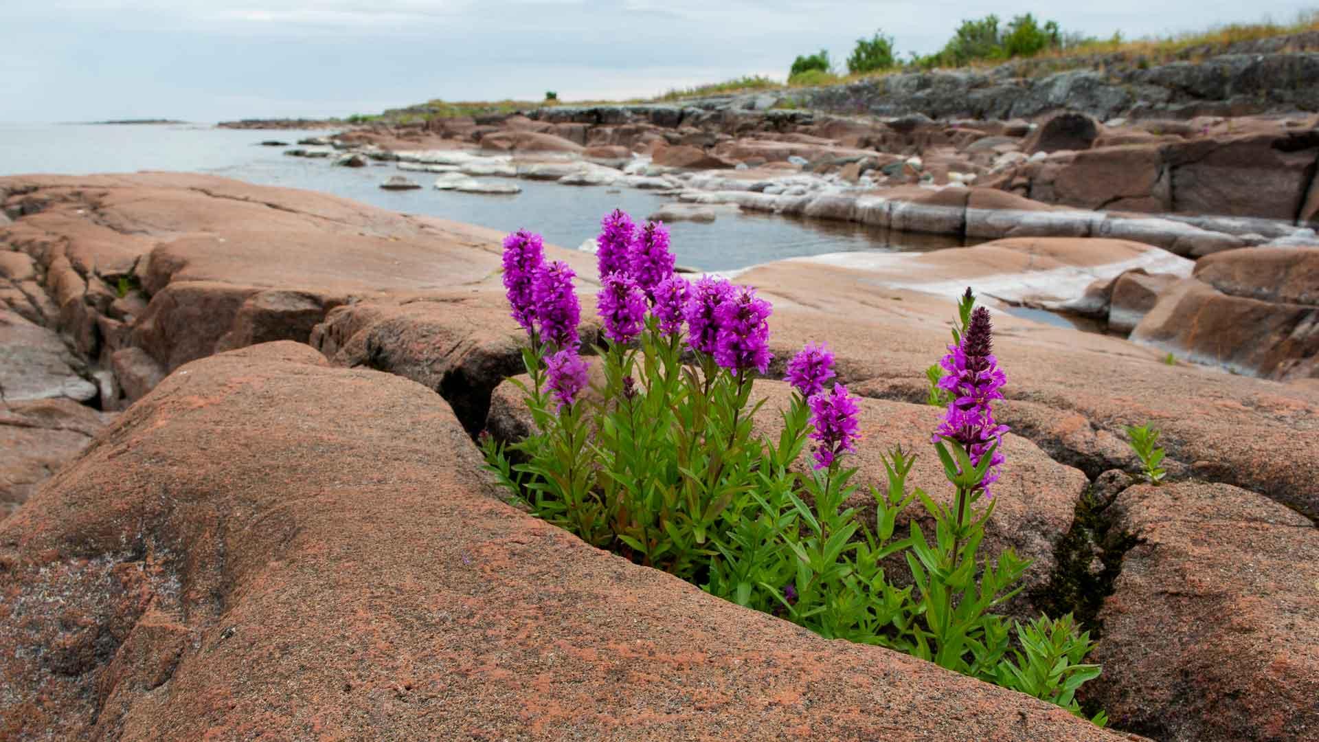 Laatokan rannoilla luonto on vuosi vuodelta puhtaampaa. Rantoja puhdistettiin vuonna 2018, joka oli Venäjällä luonnon ja ympäristön suojelun teemavuosi.