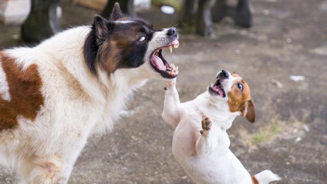 Koira voi aiheuttaa vahinkoa ihmiselle tai toiselle koiralle.