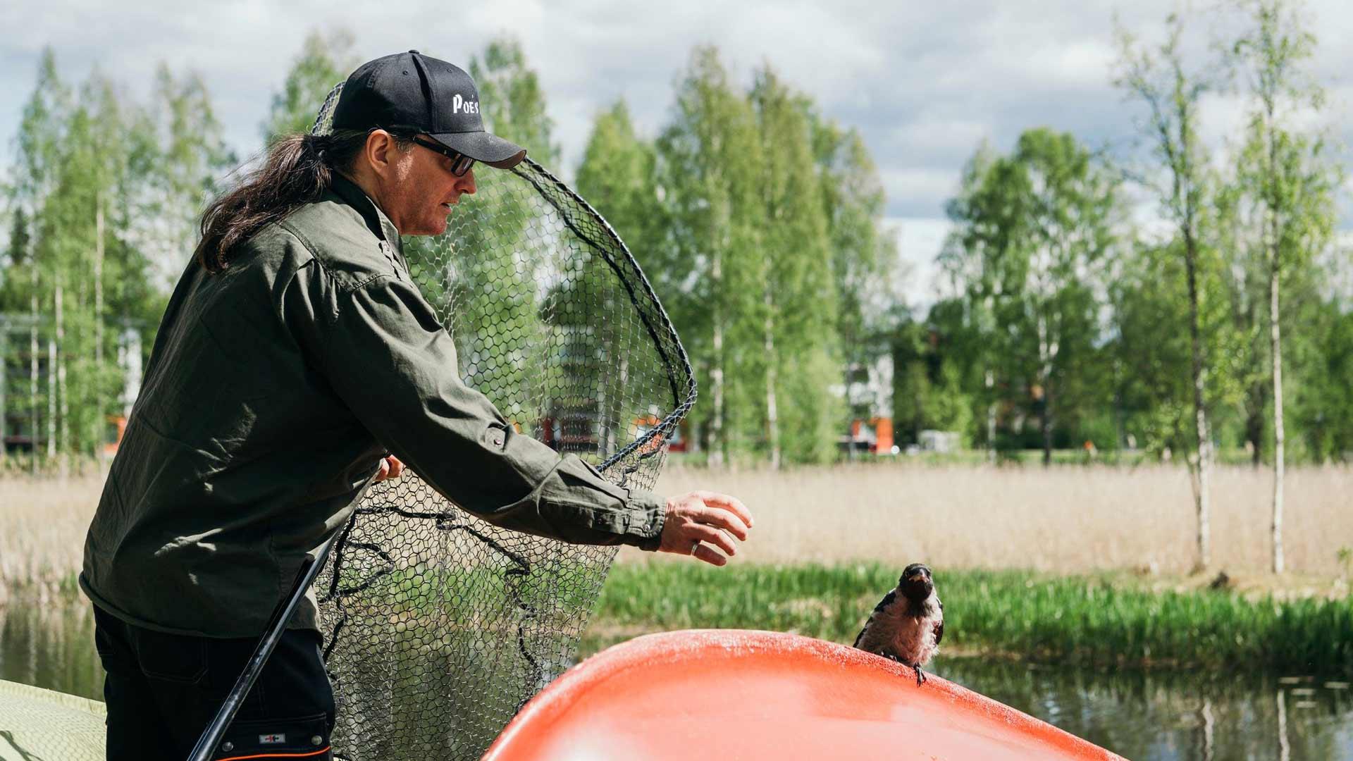 Mikkelin venesatamassa kyyhöttänyt variksenpoika sai jäädä niille sijoilleen, koska sen emolintu vartioi poikastaan läheisessä petäjässä.