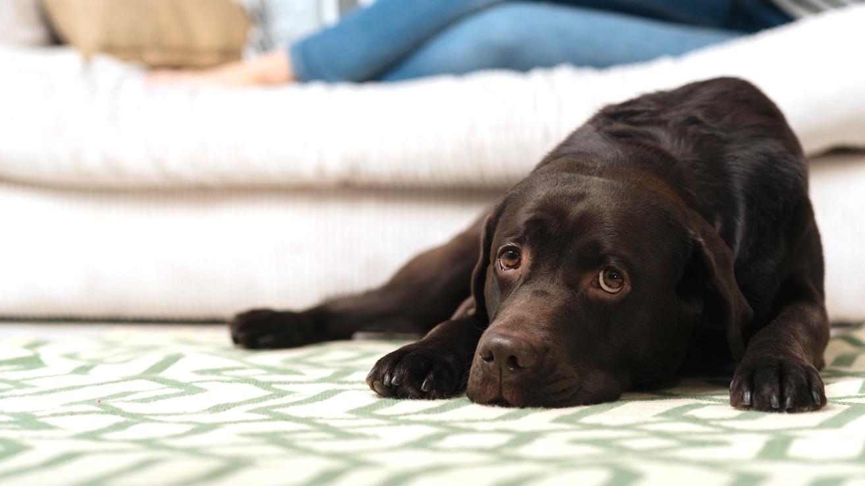 Ennen koiran hankintaa kannattaa miettiä, millainen koirarotu elämäntyyliisi sopii. Aktiivinen koira tarvitsee paljon aktiviteetteja.