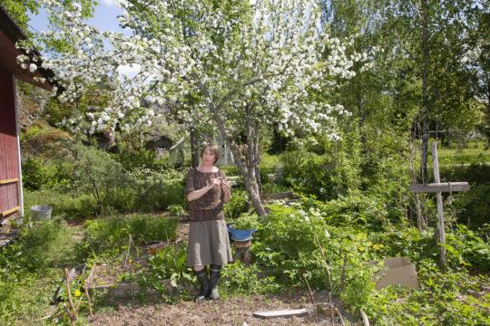 Kirjailija Reetta Niemelän pihamaalla puut, pensaat, hyönteiset ja muut eliöt saavat olla luonnollisessa vuorovaikutuksessa.