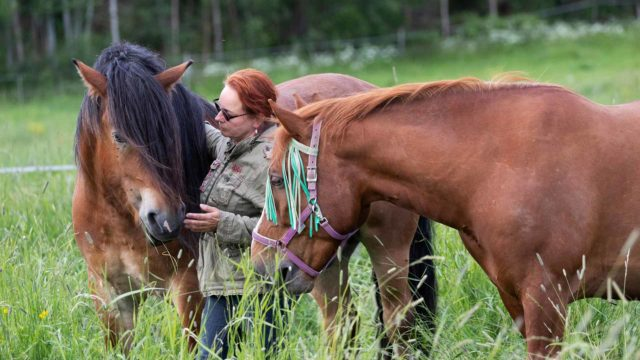 Hevosonnettomuus