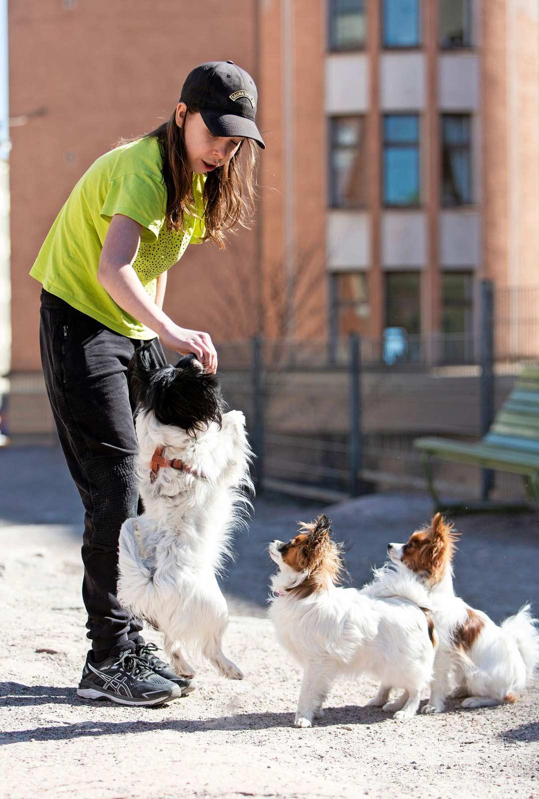 Laumanjohtajaksi leikkisästi nimetty Frans Frangén koettaa kouluttaa koiriaan kuuliaisiksi.