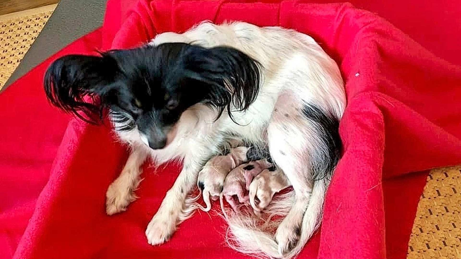Milo, Napis ja Namu makasivat Murun suojissa hyvin sujuneen synnytyksen jälkeen 5. lokakuuta 2019.