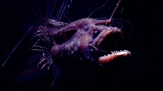 syvänmerenkrottikoiras