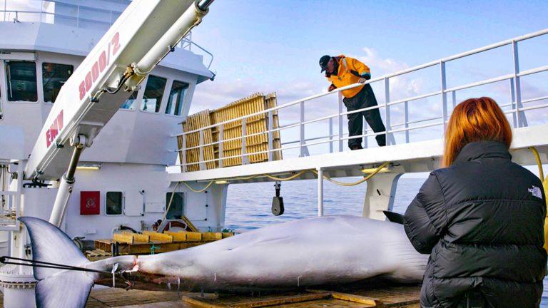 Stacey Dooley: Valaanpyytäjät